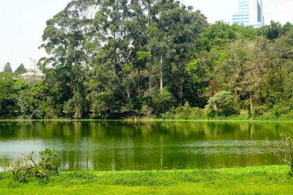 Parques em Barueri: Área verde do parque ecológico do Tietê